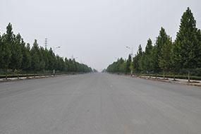 邹平道路绿化